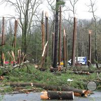 Wind snapped a stand of pine trees and blew them across the parking lot of the Mill Race Golf Course Monday morning.