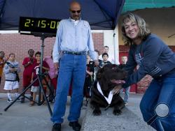 Boogie, a chocolate Labrador owned by Jerry Butts, center, outside the Downtown YMCA after awarding him his medal for finishing Evansville Half Marathon in Evansville, Ind. The 100-pound chocolate Labrador retriever ran most of the 13.1 miles in the Oct. 5 Evansville event after escaping his leash the night before. The Evansville Courier & Press reports Boogie died Tuesday, Oct. 15, 2013, of an apparent heart attack. (AP Photo/Courier & Press, Denny Simmons)