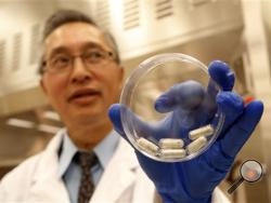 Dr. Thomas Louie, an infectious disease specialist at the University of Calgary, holds a container of stool pills in triple-coated gel capsules in his lab in Calgary, Alberta, Canada on Thursday, Sept. 26, 2013. Half a million Americans get Clostridium difficile, or C-diff, infections each year, and about 14,000 die. A very potent and pricey antibiotic can kill C-diff but also destroys good bacteria that live in the gut, leaving it more susceptible to future infections. (AP Photo/The Canadian Press)