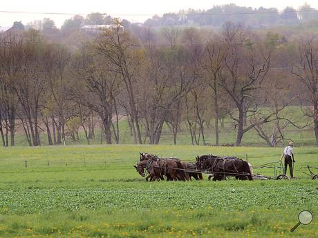 An Amish farmer uses his team of horses to plow a field along PPL Road in Anthony Township Thursday evening.