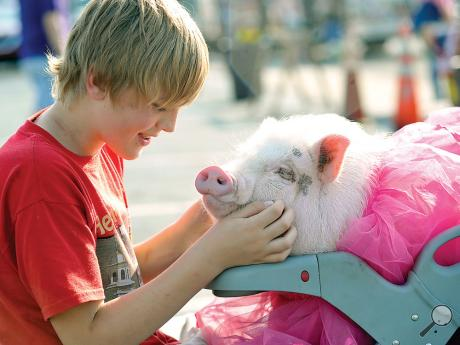Jeffrey Busch, 11, rubs the face of his pig Wilbur, 1 1/2 years old, as he sits with her waiting for the Berwick's Elks Pet and Toy Parade to start Tuesday evening in Berwick.