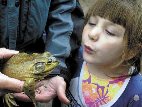 G.C. Hartman Elementary first grader Madisyn Long gets a close look at a bullfrog on the nature trail on Tuesday. Holding the bullfrog is Jon Beam with the Montour Area Recreation Commission who was managing the wild animal station during the G.C. Hartman Elementary first graders' all-day outdoor classroom experience on the Southern Columbia nature trail on Tuesday.