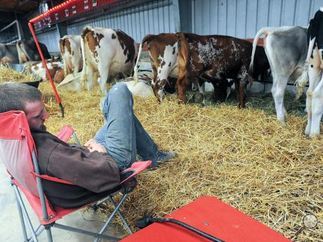 Matt Swendsen with Tru-Dale Farm grabs a nap Monday afternoon in the cattle bar on the Bloomsburg Fairgrounds. His family says he is with his cows seven days a week.