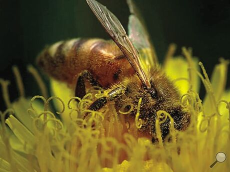 Mona Hess shares her closeup of a busy bee in Wapwallopen.