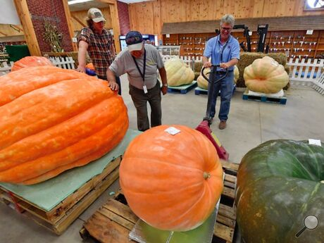 Brian Campbell, Bloomsburg Fair superintendent of agriculture, right, works with his crew to move the giant pumpkins while doing the weigh-ins Friday afternoon on the first day of the 2021 fair.