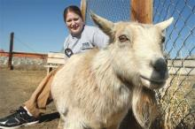 "This April 3, 2013 photo shows Butte-Silver Bow Animal Shelter supervisor Jacki Casagranda with ""Shirley"" a pygmy goat in Butte, Mont. The goat was picked up at a local bar by the animal warden last weekend. Fairmont Hot Springs Resort general manager Steve Luebeck says staffers knew the goat was missing but didn't realize it had been stolen. Shirley was returned to the resort's petting zoo. (AP Photo/The Montana Standard, Walter Hinick)"